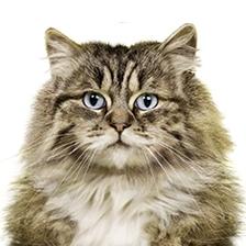 Výrobky pro čistotu koček