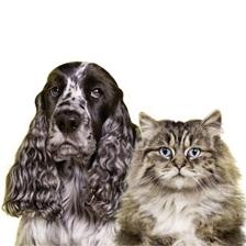 Pro čistotu koček a psů v domácnosti